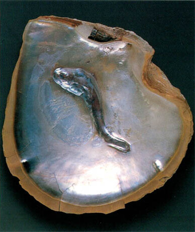 Oyster shell with a 'fish' blister pearl